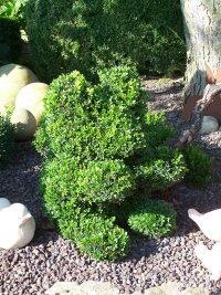 Buchsbaum Formschnitte Als Tiere Buchsbaumfiguren Im Garten Bei