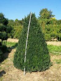 buchsbaum buchsb ume buchsbaumhecken buchsbaumfiguren formschnitte buchsbaumz nsler bux. Black Bedroom Furniture Sets. Home Design Ideas